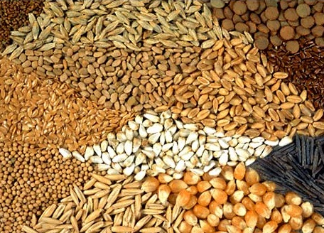 Семена яровых культур на посевную 2018