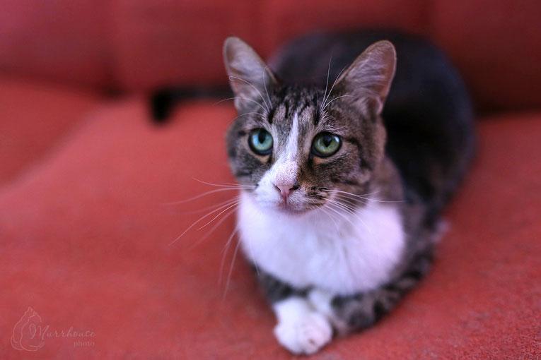 Миниатюрная кошка Крошка в добрые руки